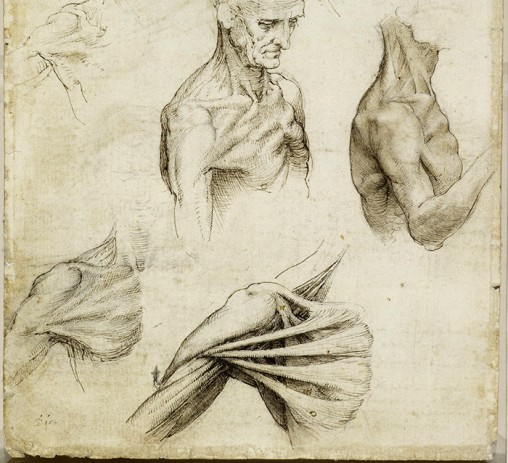 Recto: The muscles of the shoulder. Verso: The superficial anato